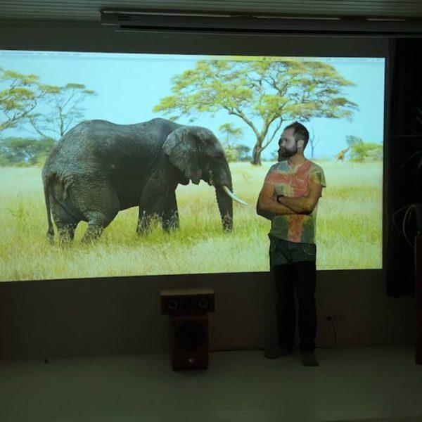 wyświetlanie słonia na powierzchni projekcyjnej
